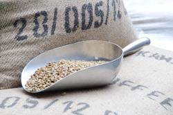 焙煎前のコーヒー豆